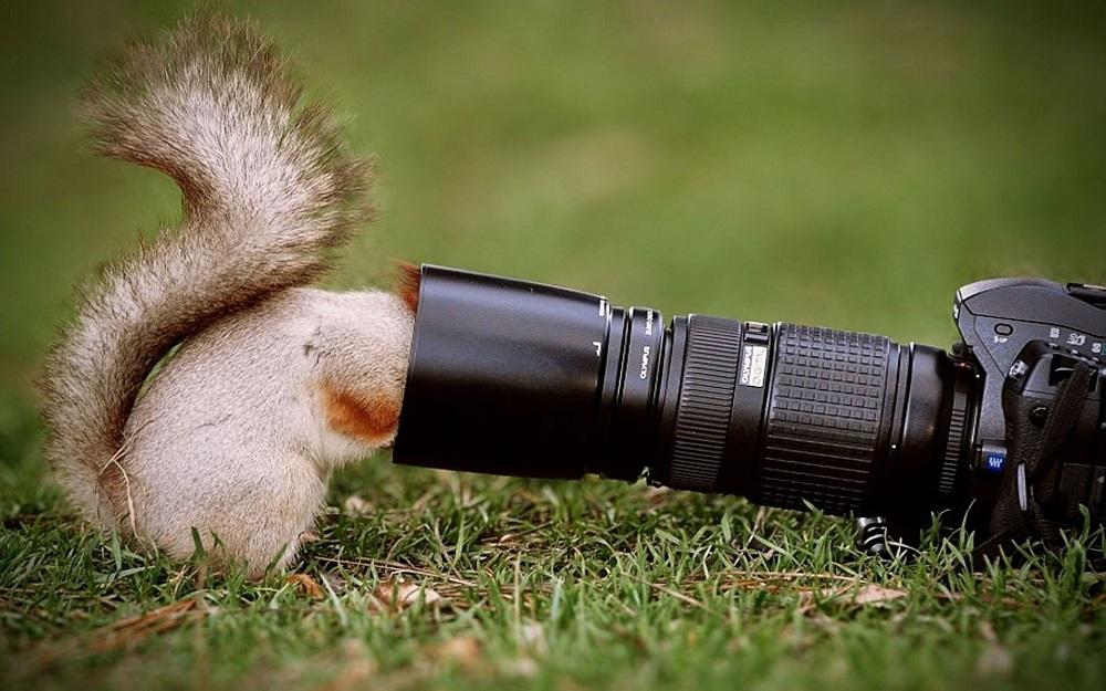 curious-squirrel